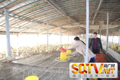 睢县强力推进标准化规模养殖场建设